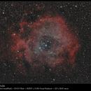 Rosette nebula,                                michaelmorris