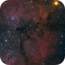 Elephant's Trunk and Garnet Star,                                Anthony Quintile