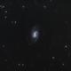 Galaxy NGC 3359,                                Steven Bellavia