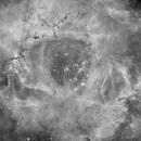 Rosette nebula,                                Jaime Alemany