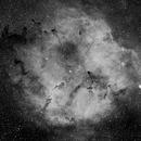 IC 1396 Wide Field,                                hoa101