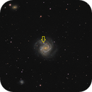 M 61 LRGB Supernova (cropped version),                                Paul Muskee