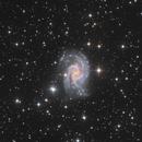 NGC 2835 LRGB,                                Chris Parfett @astro_addiction