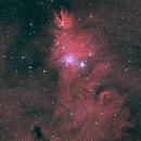 NGC 2264 - Cone Nebula & Christmas Tree Cluster,                                Yizhou Zhang