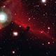 Horsehead Nebula (Barnard 33),                                Erik Stein