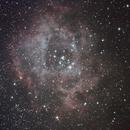 C49 - The Rosette Nebula,                                Dave Beadle