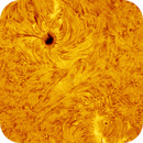 SunSpot 2628 Solar Surface Detail,                                Martin (Marty) Wise