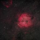IC 1396 Widefield,                                Wolfgang Ransburg