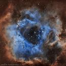 Caldwell49 Rosette,                                Dcox17
