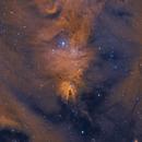Christmas Tree Cluster with Hubble's Variable Nebula (NGC 2264 and NGC 2261),                                Will Czaja