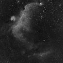 Seagull Nebula - IC 2177,                                NewfieStargazer