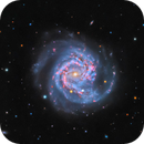 M61 - And a Supernova,                                Jason Guenzel