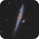 The flying whale... NGC 4631,                                AstronoSeb