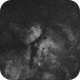 Vlindernevel (Sadr) Ha,                                petelaa