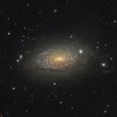 M63, The Sunflower Galaxy,                                Stephan Linhart