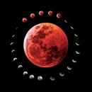 Lunar eclipse montage January 20th 2019,                                Ray Blais
