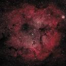 IC1396: Elephant's Trunk Nebula (HOO) (2020),                                Daniel Tackley
