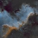 Cygnus Wall,                                Dave Dev