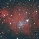 Cone Nebula, NGC 2264, Christmas Tree Cluster,                                Avenar