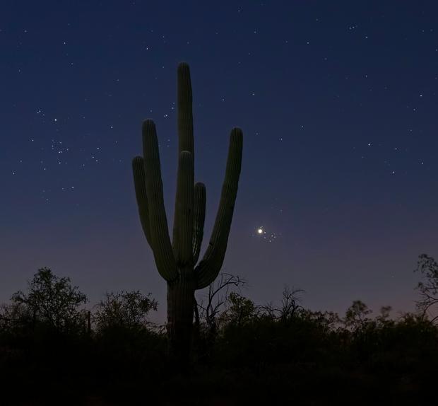 Venus, Pleiades and Saguaro,                                Scott Tucker