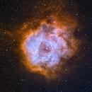 Rosette NGC2238,                                Sharky