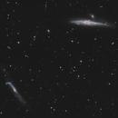 NGC4631 - Galaxie de la Baleine,                                Francis Moreau