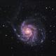 Pinwheel Galaxy (M101),                                dswtan