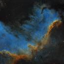 Cygnus Wall,                                Elisabeth Milne