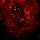 Rosette Nebula - NGC 2237 -Caldwell 49,                                Norm Fox