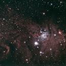 NGC 2264,                                danimal40