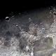 Mare Imbrium, Montes Apenninus,                                Dieter Gattler