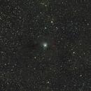 NGC 7023 / Iris Nebula,                                Tom