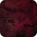 Elephant Trunk Nebula,                                Rick Gaps