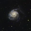 M101 isolated backyard,                                John Favalessa