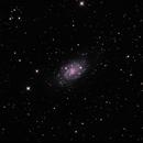 NGC 2403,                                Randy Roy