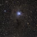 NGC7023 Iris Nebula,                                Dan Crosse