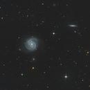 M 100 / NGC 4321,                                Falk Schiel