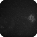 Rosette H-Alpha Wide Field,                                Thomas