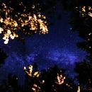 Above the Trees,                                Gilbert Ikezaki