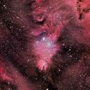 Cone Nebula and Christmas tree - NGC 2264,                                Prabhakar