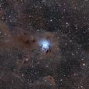 Iris Nebula (NGC 7023),                                Wintyfresh