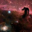 Colorized Horse Head Nebula,                                Edoardo Luca Radice (Astroedo)