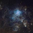 In the (Large) Magellanic Cloud,                                Roberto Colombari