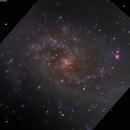 M33 - lighting up the pinwheel,                                Tom Gray