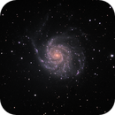 M101 - in a spin,                                Tom Gray
