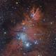 Cone Nebula and Fox Fur,                                Mirko M