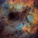 Elephant Trunk Nebula (IC 1396),                                Gary Lopez