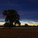 Noctilucent clouds (NLC) - 08/07/2020,                                Łukasz Żak