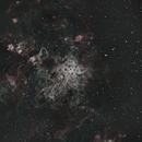 Tarantula ZWO533,                                n0de