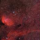 SH2-101 Tulip Nebula with Cygnus X-1,                                Mark Holbrook